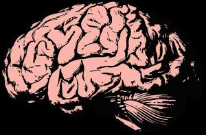 brain-2845862__340